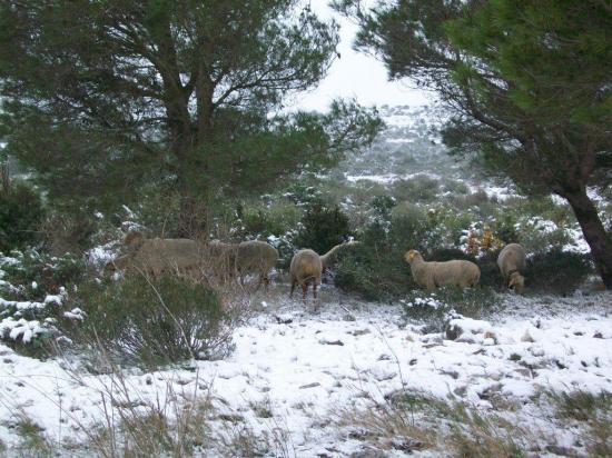 neige 2010 Janvier